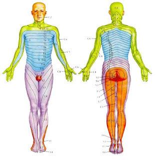 【安心と信頼の施術実績37年】首の痛み・頚椎症のお悩みなら安城整体院